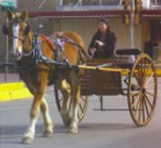corsicana_horse_and_carriage_2bt.jpg